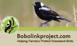 BobolinkProject.com - Visit